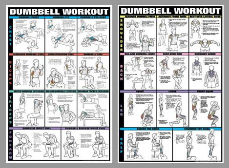 Dumbbell Workout 2 Poster Professional Fitness Wall Chart Combo